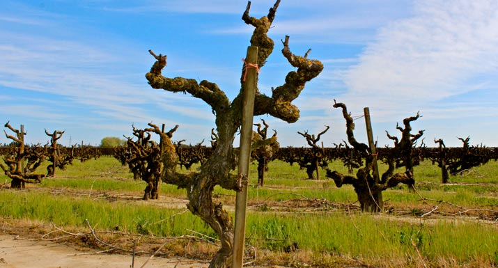 photo of Marian's Vineyard